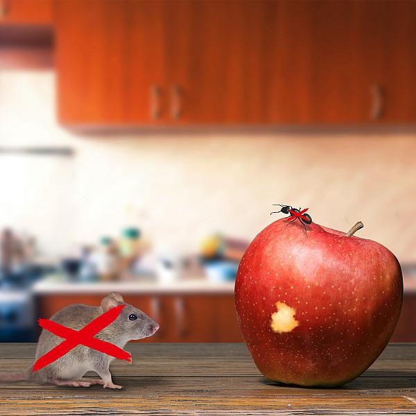 Odganjalec miši, mravelj