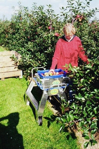 Zaboji za obiranje sadja